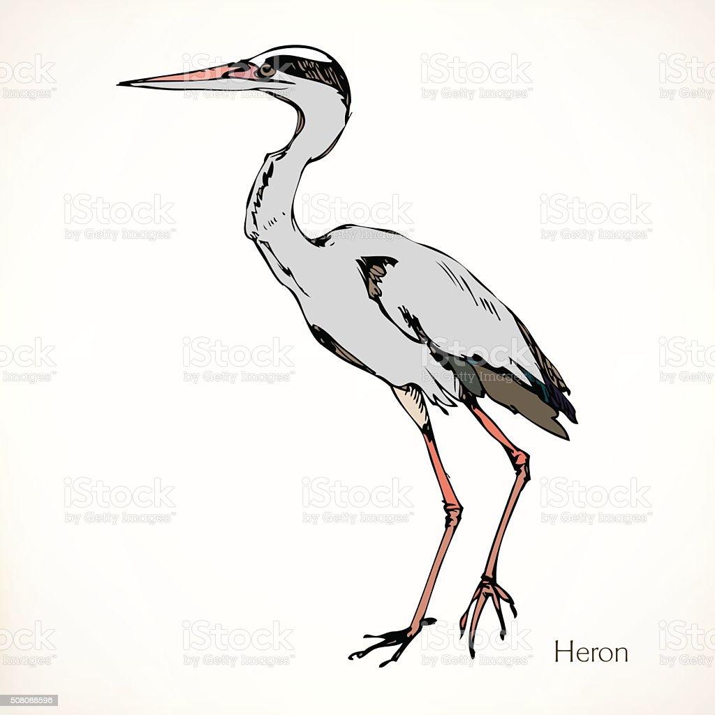 Heron, vector illustrations vector art illustration