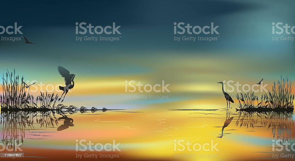Herons at Sunset vector art illustration