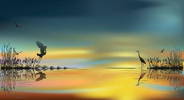 stockillustraties, clipart, cartoons en iconen met herons at sunset - wildplassen