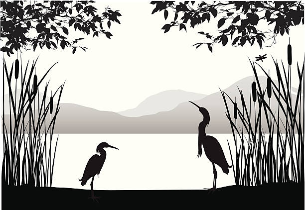 Herons' Habitat Vector Silhouette A-Digit water bird stock illustrations