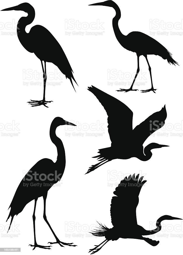 Herons vector art illustration