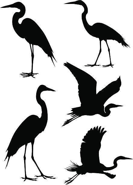 Herons A collection of five heron silhouettes. For other bird silhouettes see #7623647,#5638470,#3933454 heron stock illustrations