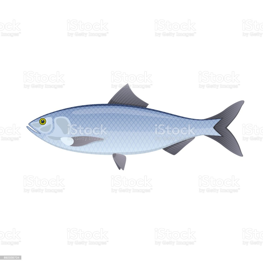 Herring. Colorful sea, river fish, swimming on blue deep sea vector art illustration