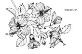 Hibiscus flower drawing.
