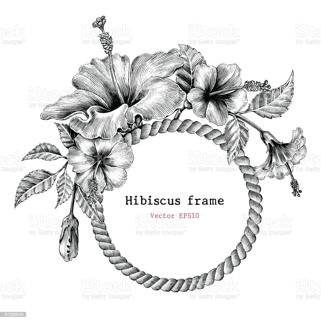 Hibiscus Flower Frame Hand Drawing Vintage Clip Art Stock Vector Art ...