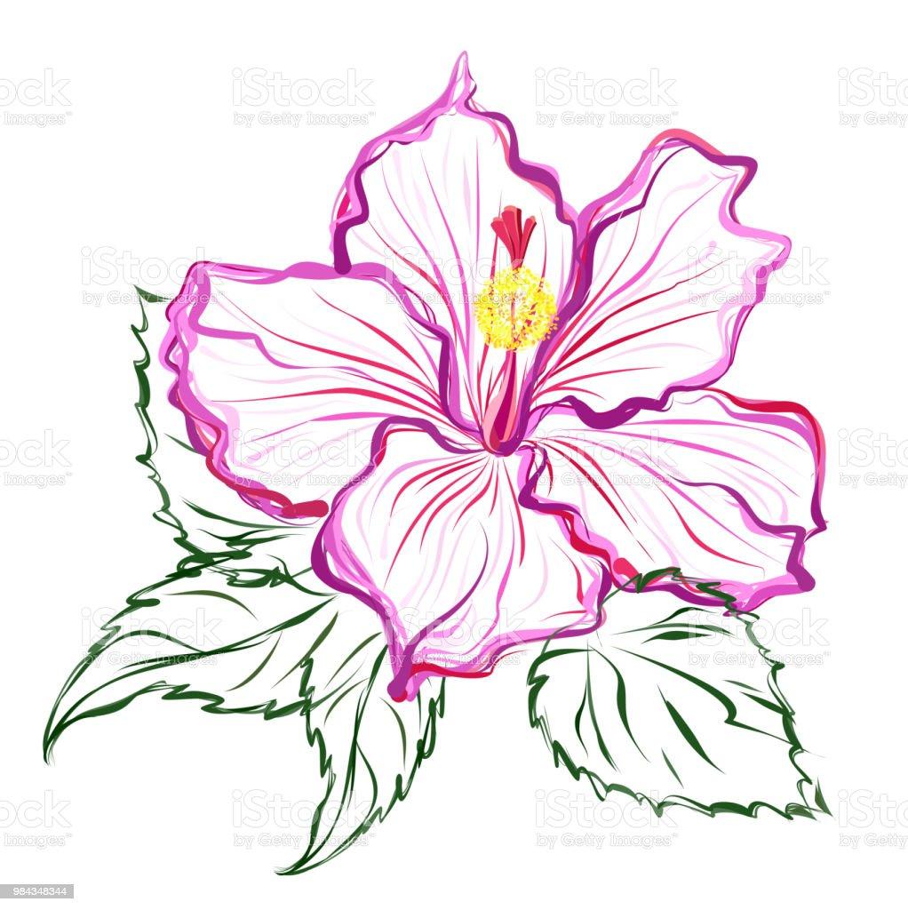 ハイビスカスの花手描きの背景スケッチ アオイ科のベクターアート素材