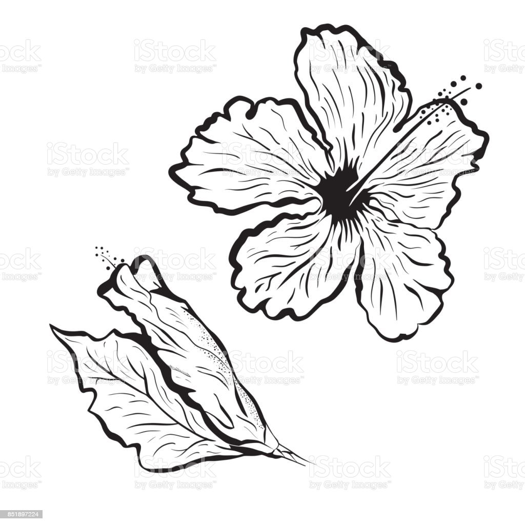 Hibiscus Flower In Tattoo Style Black And White Graphic Tropical