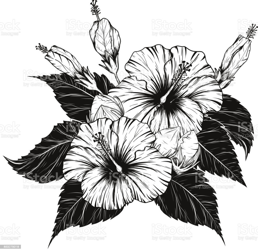 Hibiscus Flower Vector By Hand Drawing Stock Vector Art More