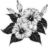 Hibiscus flower vector by hand drawing