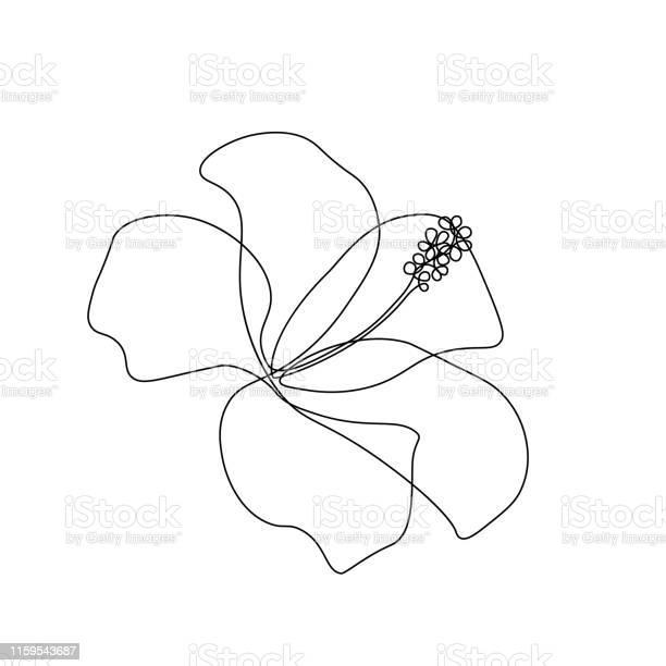 Hibiscus flower vector id1159543687?b=1&k=6&m=1159543687&s=612x612&h=a zfyrecacgmrzse9oturi2yvp1glfp4jtmw0ca0p5w=