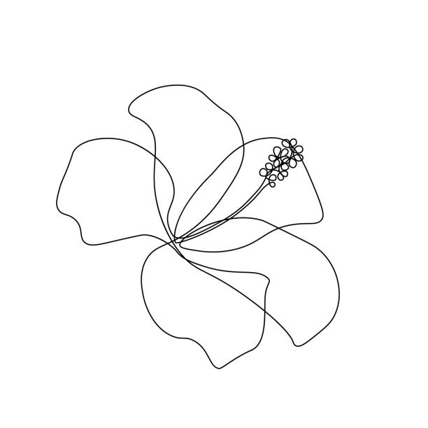 stockillustraties, clipart, cartoons en iconen met hibiscus bloem - floral line