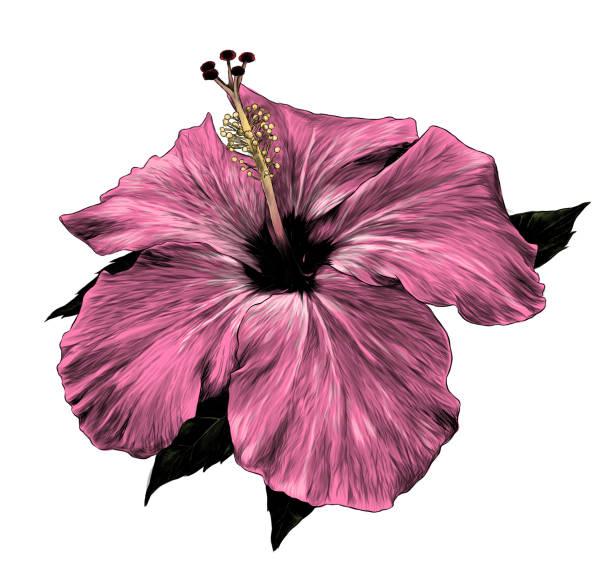hibiscus flower – artystyczna grafika wektorowa