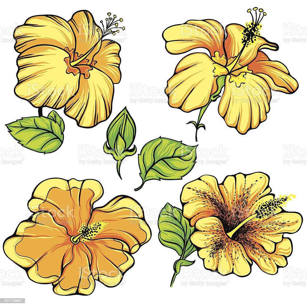 Hibiscus flower vector stock vector art more images of art hibiscus flower vector royalty free hibiscus flower vector stock vector art amp izmirmasajfo