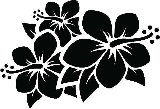 Hibiscus Flowers Group of tropical flowers. Professional clip art for your print project or Web site. hawaiian culture stock illustrations