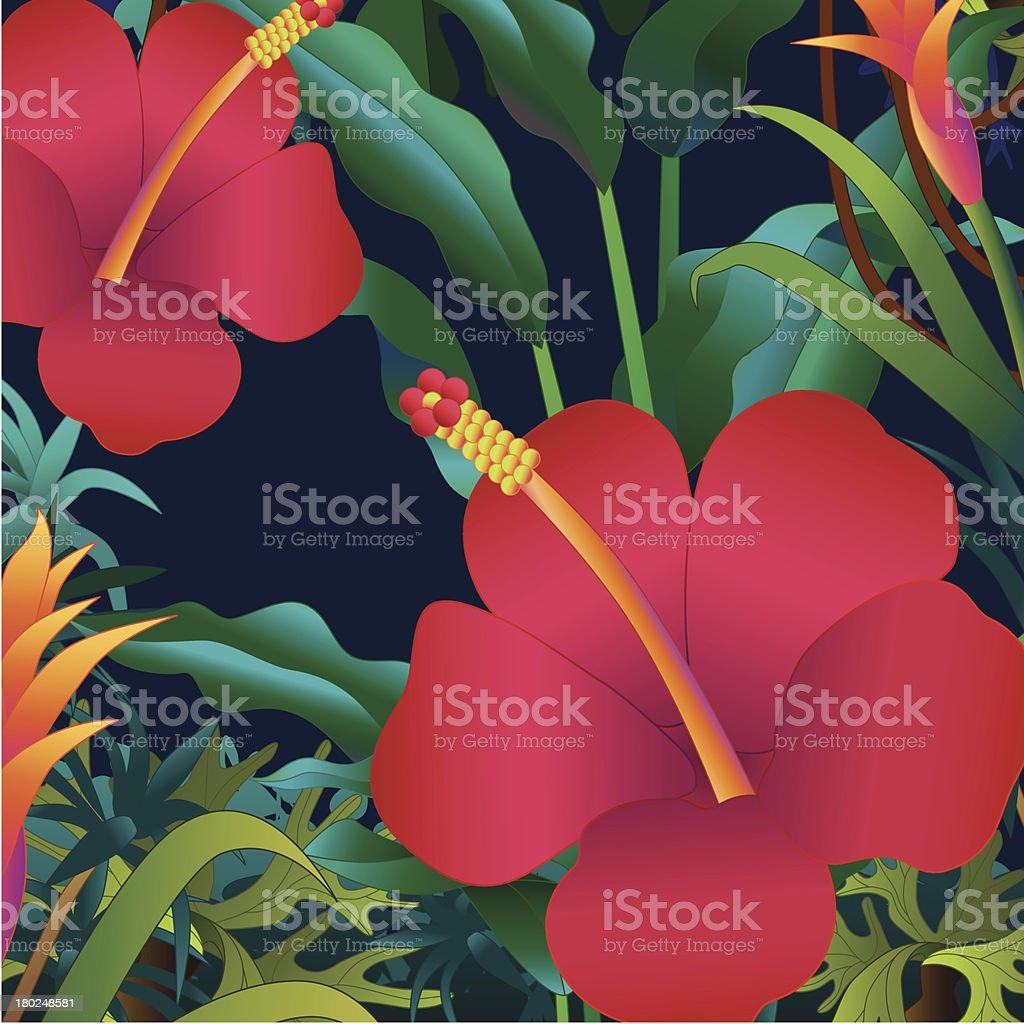Hibiscus Flowers Stock Vector Art More Images Of Amazon Rainforest