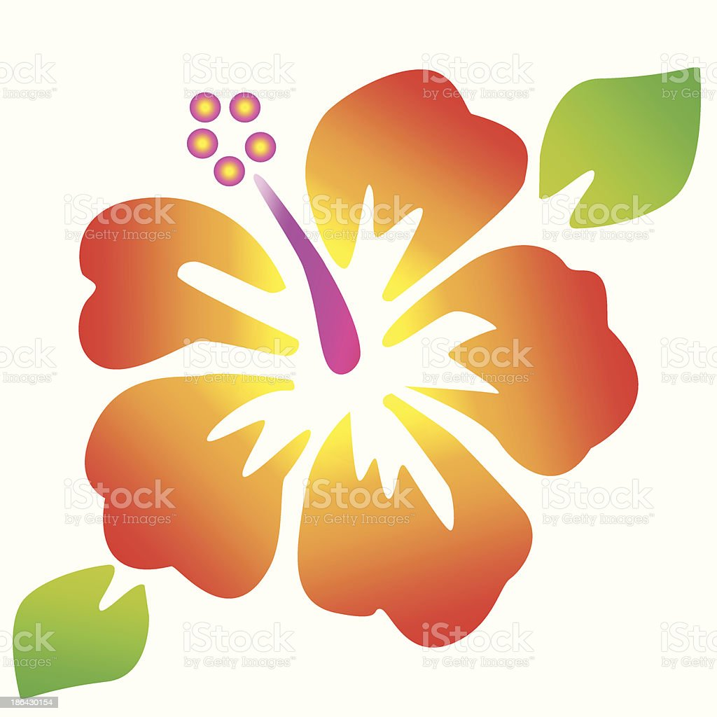 Hibiscus Flowers Stock Vector Art More Images Of Backgrounds