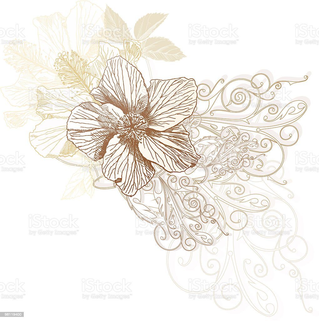 Fiori di ibisco fiori di ibisco - immagini vettoriali stock e altre immagini di bellezza naturale royalty-free