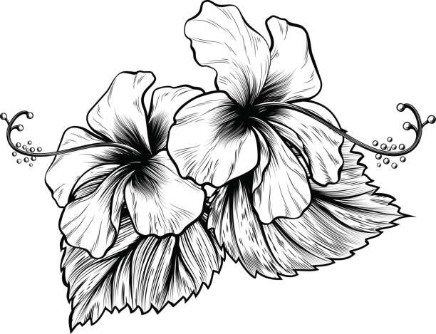 illustrations, cliparts, dessins animés et icônes de hibiscus fleurs style vintage gravure sur bois, gravée gravure - tatouages de fleurs