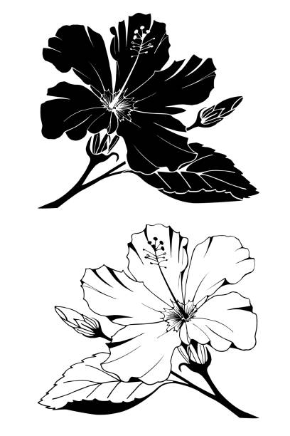 Best Silhouette Of Hibiscus Flower Outline Illustrations