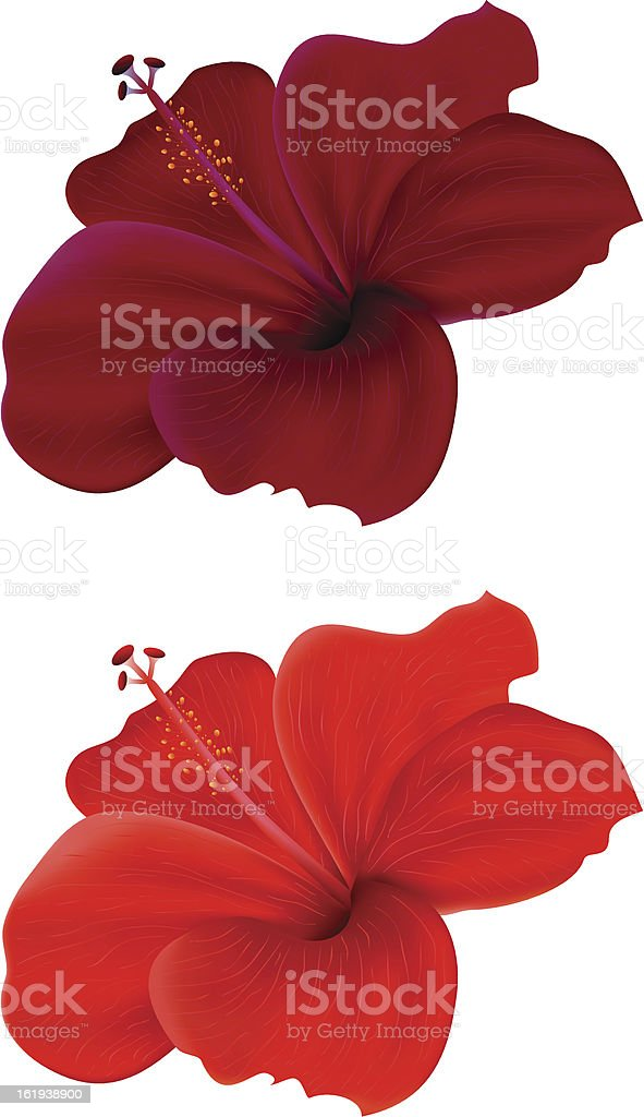 hibiscus royalty-free hibiscus stock vector art & more images of beauty