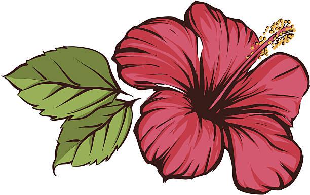 Hibiscus vector art illustration