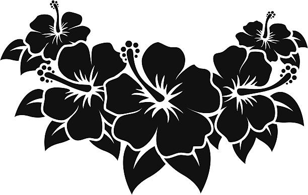 Hibiscus Black vector Hibiscus Flowers, no white outlines, easy to change color or paste to any background. Vector path can also be used for contour cut stickers or for t-Shirt flock prints. hawaiian culture stock illustrations