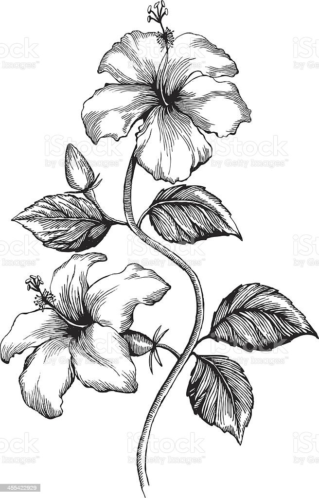 hibiscus stock vector art amp more images of black and white