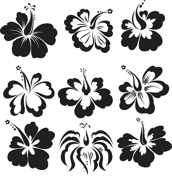 hibiscus  - hibiskusgarten stock-grafiken, -clipart, -cartoons und -symbole
