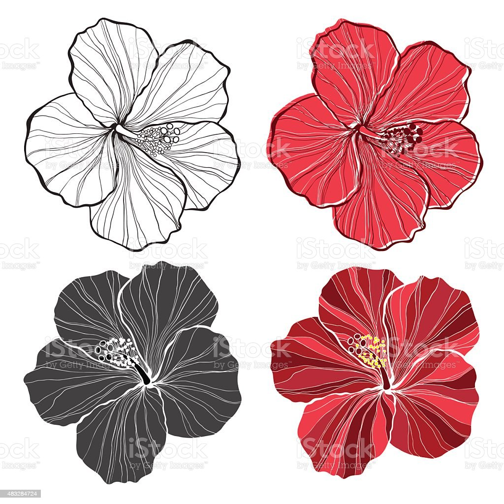 Hibiscus Vector Set Of Hibiscus Flowers Isolated On White Background