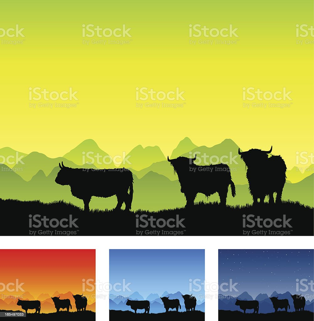 Highland cattle silhouettes in open landscape vector art illustration