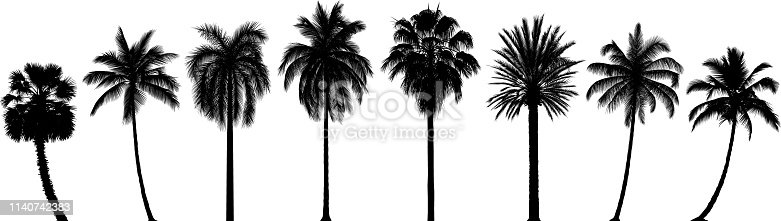 Highly detailed palm trees.