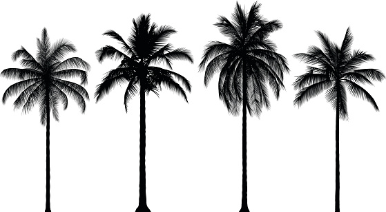 Highly Detailed Palm Trees