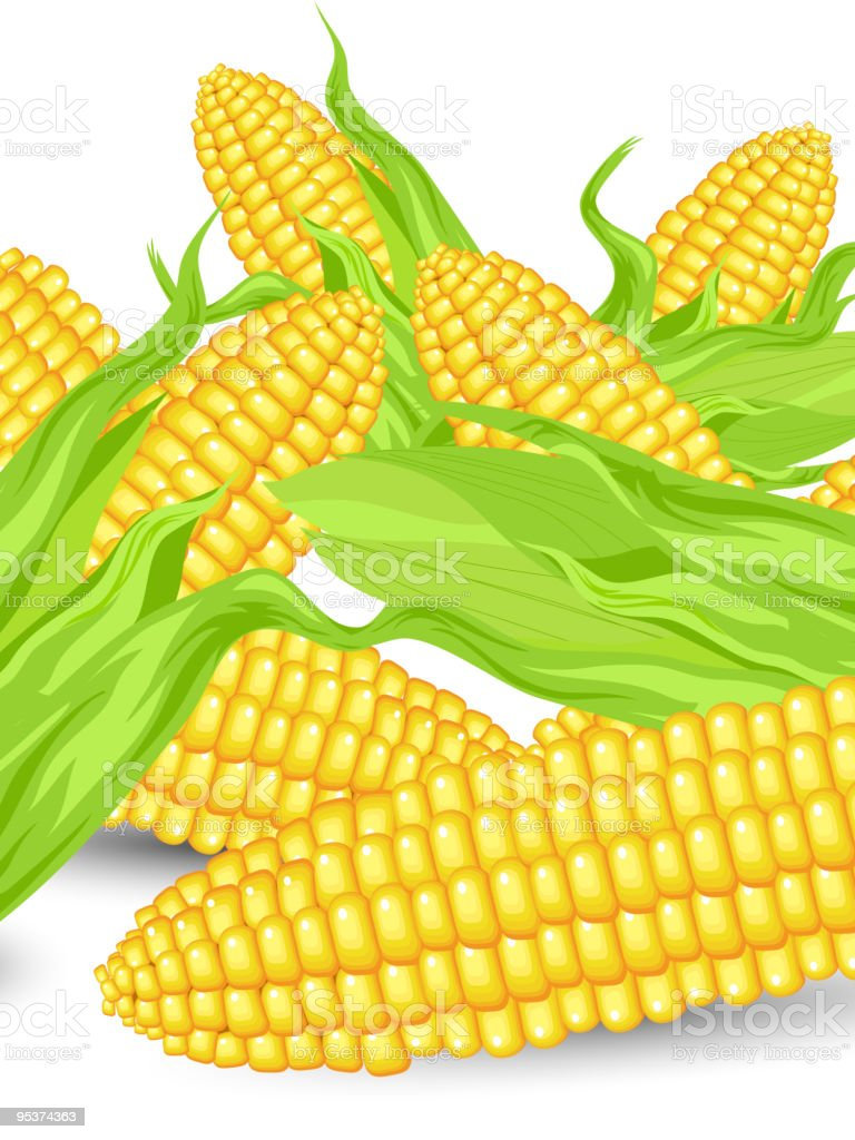 Hill Ears of ripe corn vector art illustration