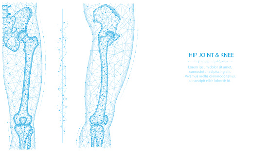Hip joint and knee front and side view polygonal vector illustration. Leg and pelvis anatomy concept. Medical abstract low poly design on a white background
