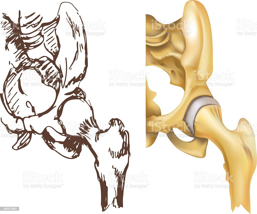 Hip Joint vector art illustration