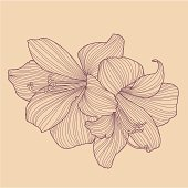 A vector drawing of two Hippeastrum flowers, in retro hand-drawn linework style.