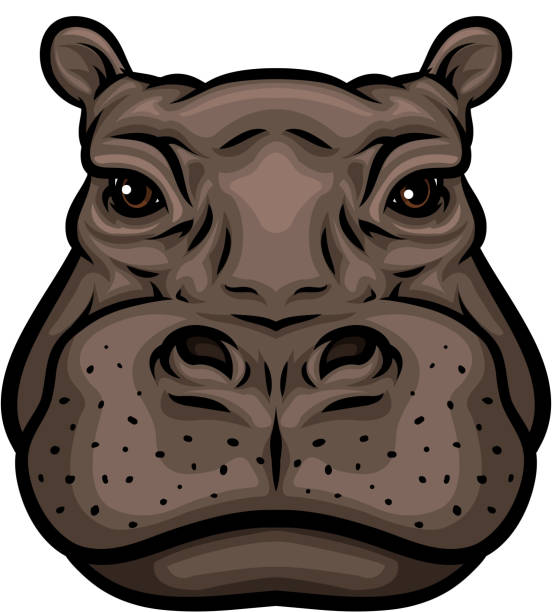 Hippo Art Images: Best Hippopotamus Illustrations, Royalty-Free Vector