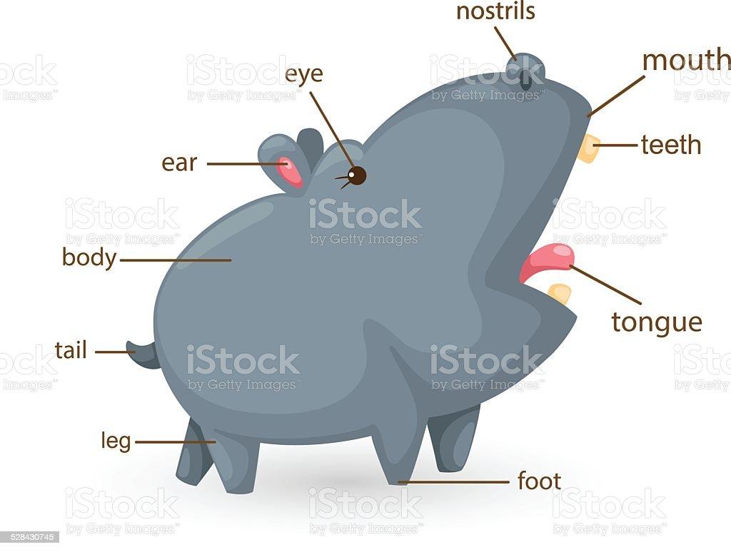 Diagram Of Hippos - Electrical Work Wiring Diagram •
