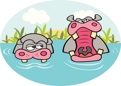 Hippo Yawn