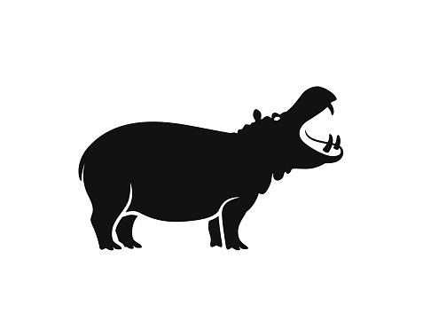Hippopotamus Isolated hippopotamus on white background