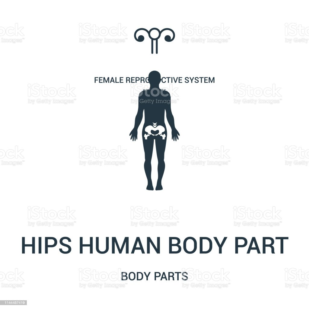 hips human body part icon vector from body parts collection. Thin...