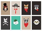 istock hipster, portrait of dog, gentlemen dog 543669208