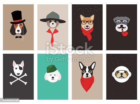 professionas, Fashion portrait of dog, schnauzer