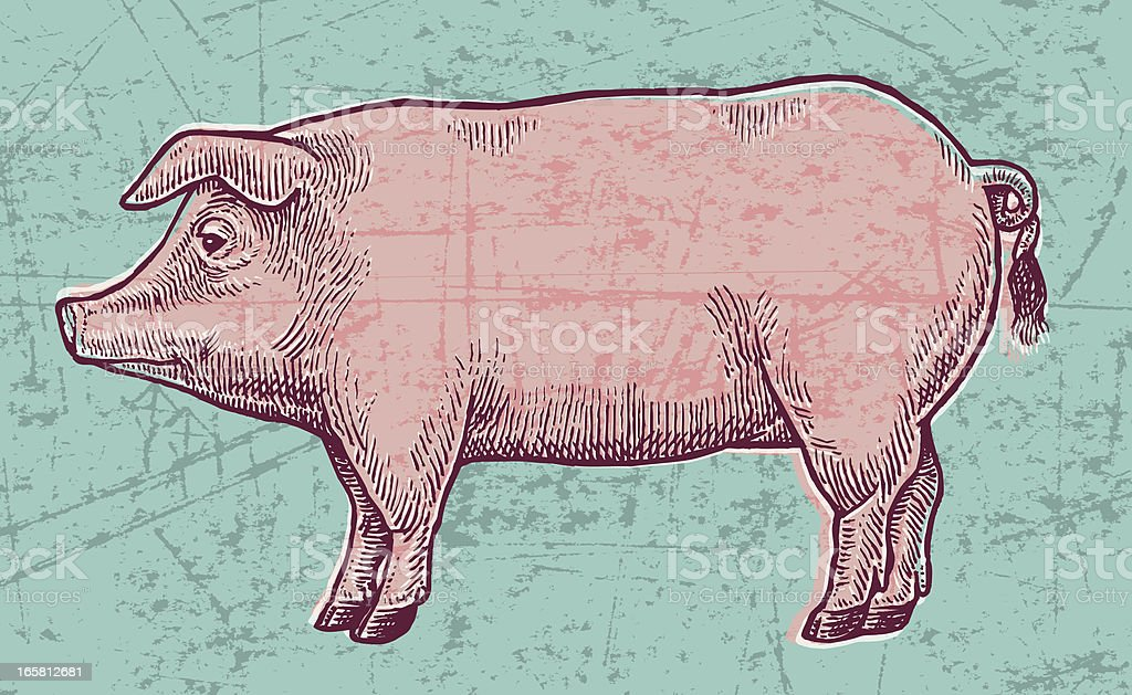 Hog Pig Pork Grunge royalty-free stock vector art