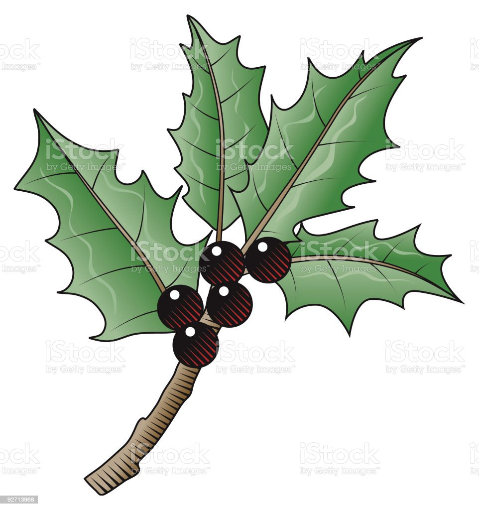Holly and berries vector art illustration
