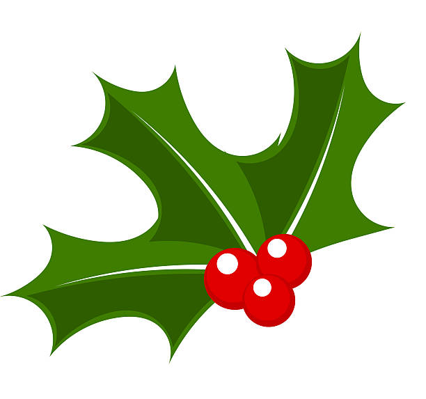 Holly berry Holly berry. Christmas symbol vector illustration christmas clipart stock illustrations