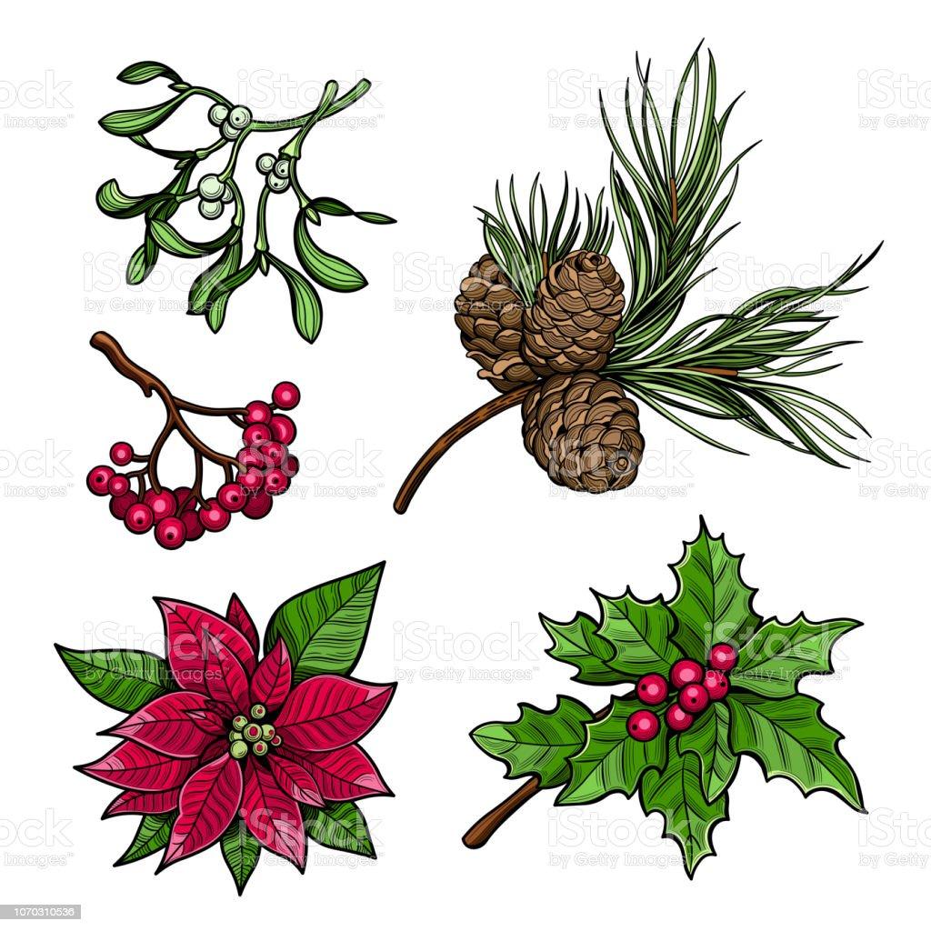 Bouquet De Noel Avec Du Houx branche de houx avec branche de baies Épinette avec cônes