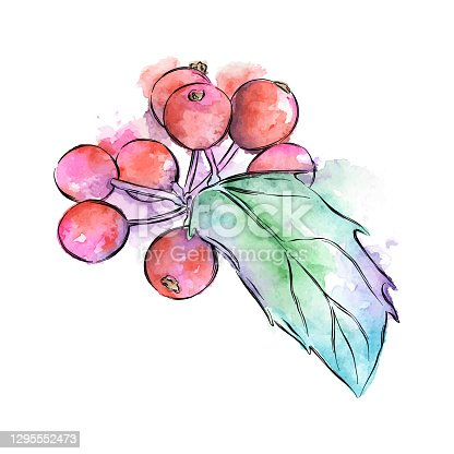 Holly in watercolor and ink for Christmas or winter. Vector EPS10 Illustration.
