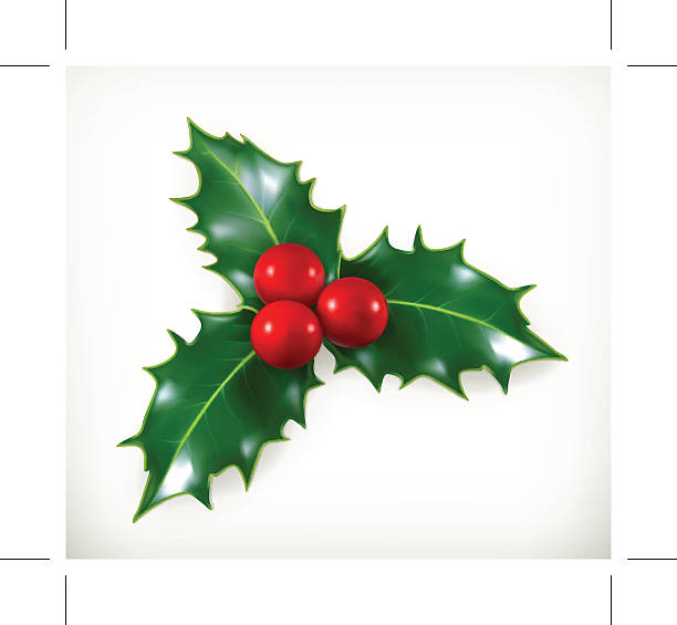 holly, traditional christmas decoration, vector icon - twig stock illustrations, clip art, cartoons, & icons