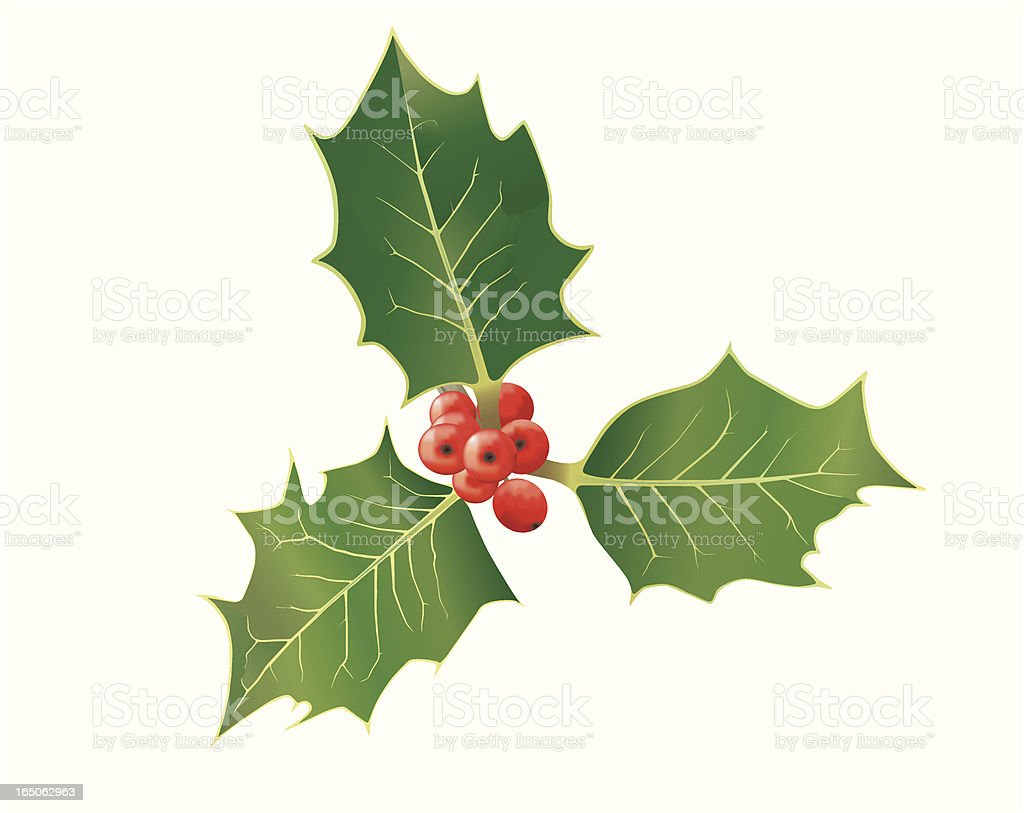 holly vector royalty-free stock vector art